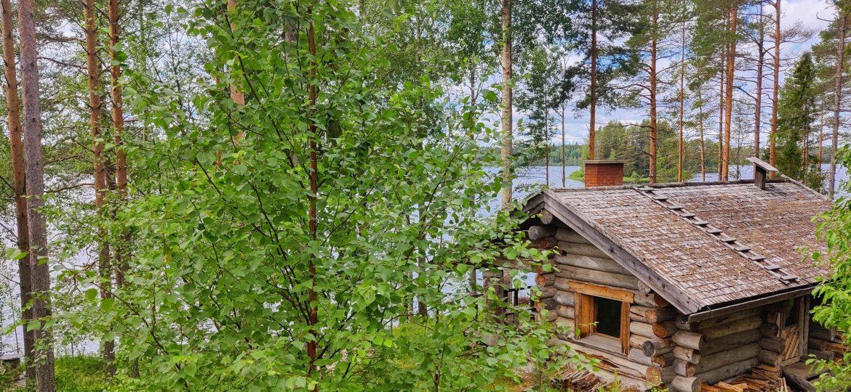 Savusauna ja koivuja järven rannalla.